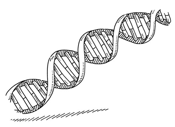 DNA Double Helix Symbol Drawing vector art illustration