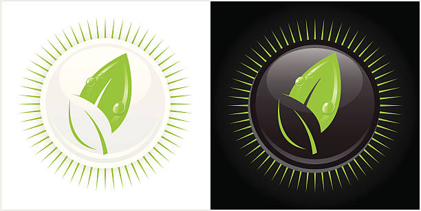 Double Leaf vector art illustration