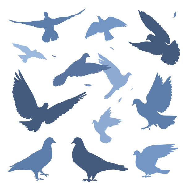 dove flock doves flock silhouettes isolated on white set. pigeon stock illustrations