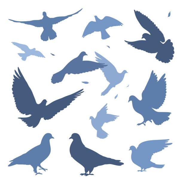Taubenherde – Vektorgrafik