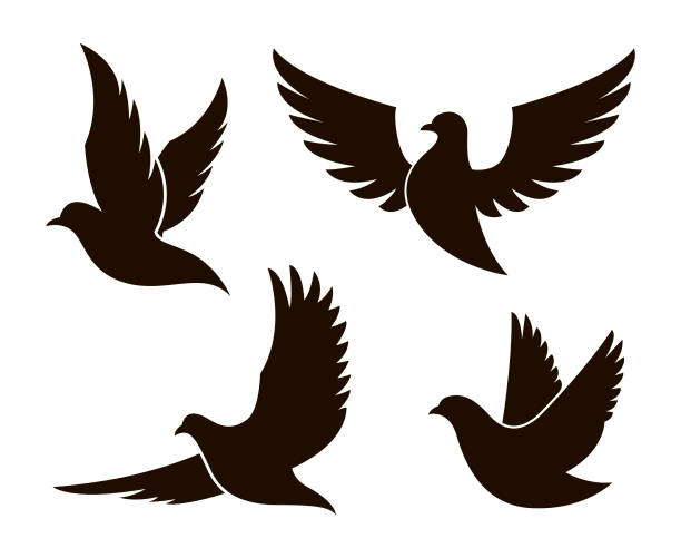 dove image set collection of black dove silhouettes isolated on white background pigeon stock illustrations