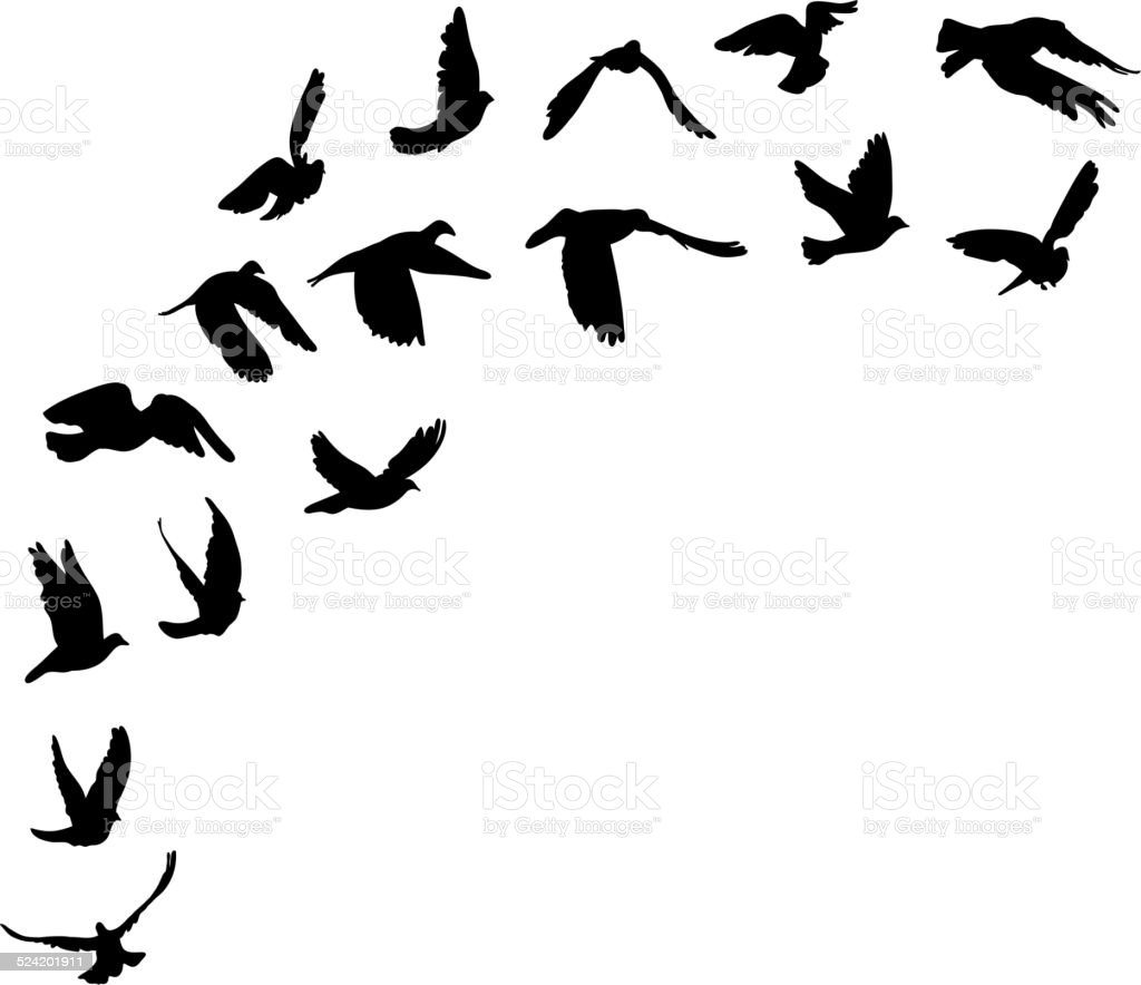 Doves and pigeons set for peace concept and wedding design. vector art illustration