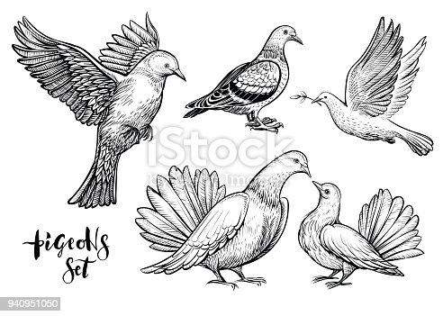 istock Doves hand drawn illustration. 940951050