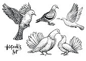 Doves hand drawn illustration.