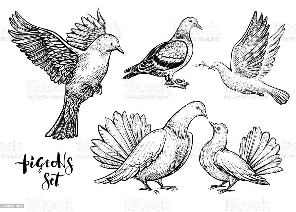 Las palomas ilustración dibujado a mano. - ilustración de arte vectorial