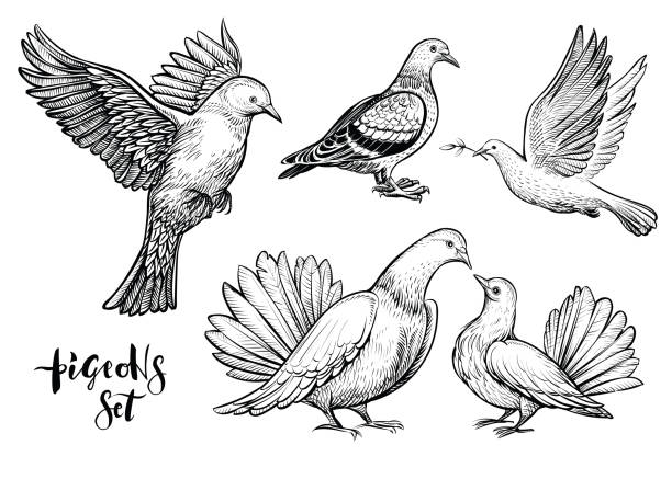 illustrations, cliparts, dessins animés et icônes de colombes illustration dessinée à la main. - tatouages ailes