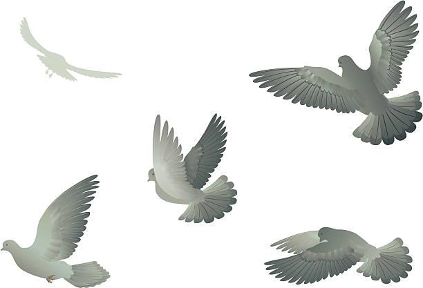 Doves – Vektorgrafik