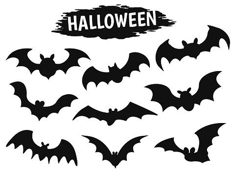 Dracula bat's shadow icon during the Halloween season.