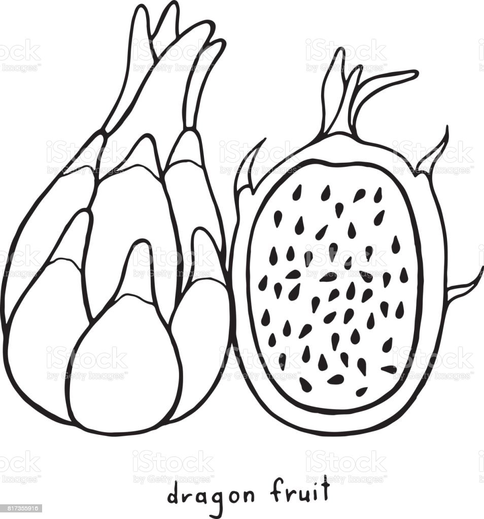Dragon Fruit Coloring Page Graphic Vector Black And White Art For Books Adults