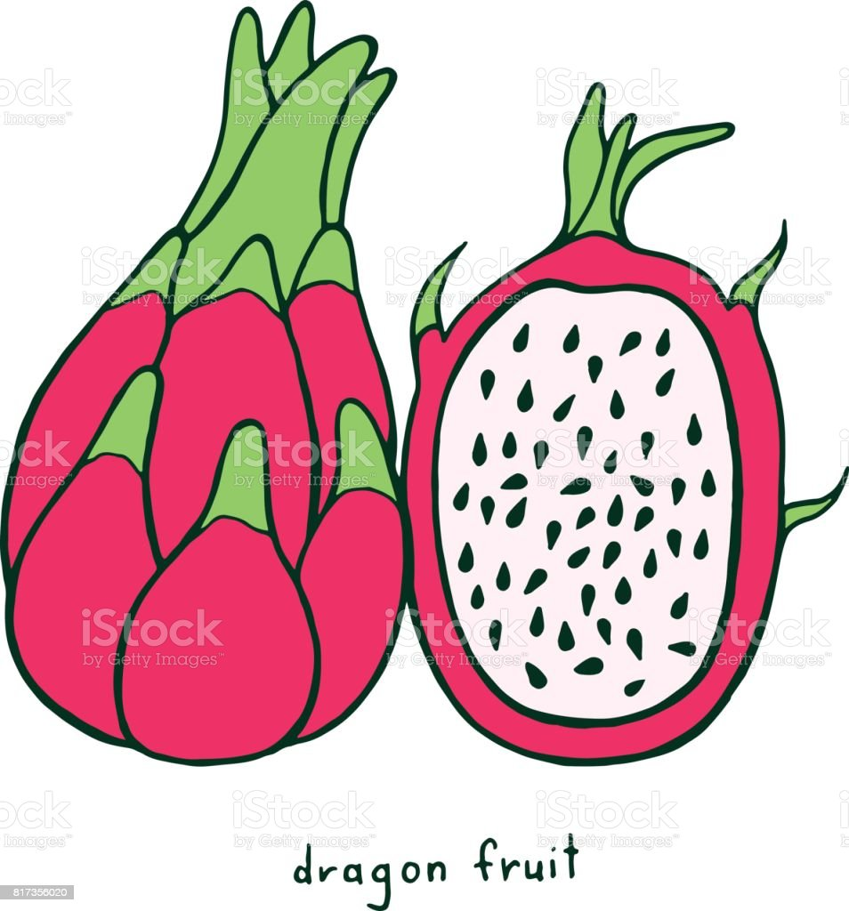 Ilustración de Página Para Colorear De Dragon Fruit Gráfico Vector ...