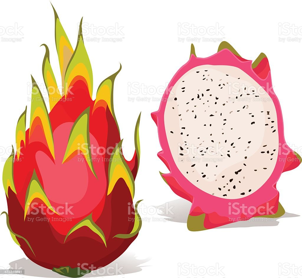 dragon fruit - vector illustration royalty-free stock vector art