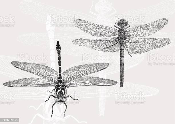 Dragonflies vector id669709122?b=1&k=6&m=669709122&s=612x612&h=wvxm2tb6w4mt9thbs4ljxe9tdbugrshqx pehbc5f74=