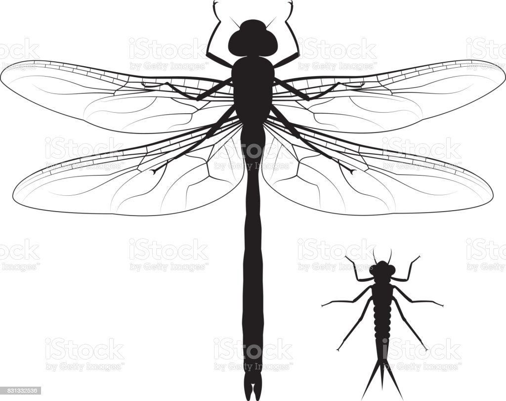 Dragonfly And Nymph Stock Vector Art & More Images of Animal Body ...