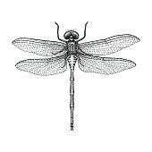 Dragonfly hand drawing vintage engraving illustration