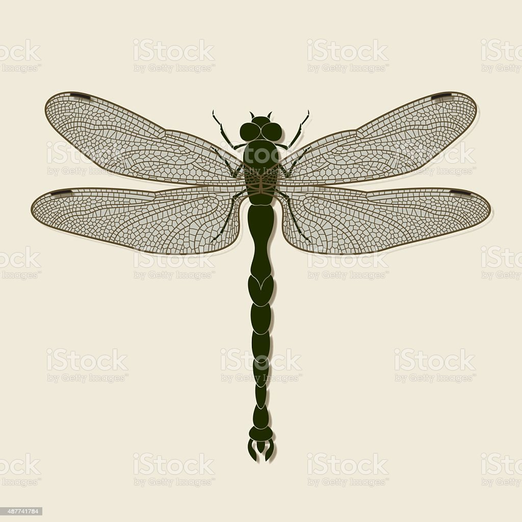 Dragonfly Illustration Stock Vector Art & More Images of Animal Body ...