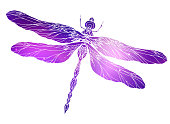 Dragonfly illustration with a boho pattern and cosmic background.  Vector element