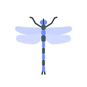 Dragonfly single flat icon. Insect simple sign in cartoon style. Wing pictogram Wildlife symbol. Entomology closeup color vector illustration isolated on white. Graphic design element for card, logo