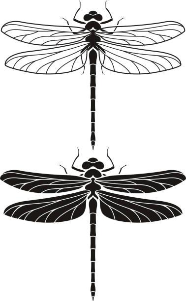 Libelle Silhouette Symbole festgelegt. – Vektorgrafik