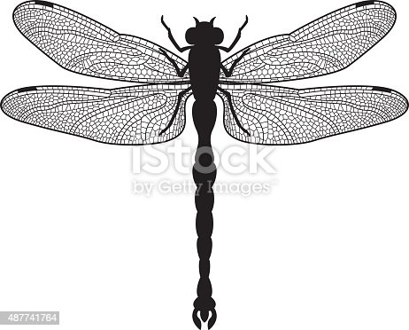 Black silhouette illustration of a big dragonfly (Anisoptera) on white Background.