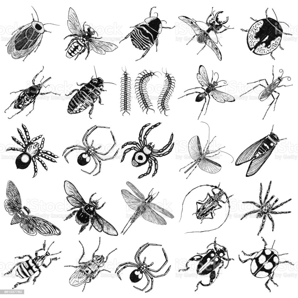 Dragonfly, small and big bug, fly, cicada, honey bee, wasp, flying ladybug and insects. Trendy embroidery stippling and hatching, shading style. Stipple art. Vector. vector art illustration