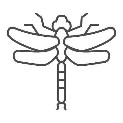 Dragonfly thin line icon, Insects concept, beautiful predatory insect with two transparent wings sign on white background, Dragonfly silhouette icon in outline style for mobile. Vector graphics.