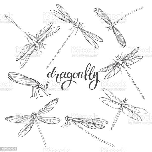 Dragonfly vector contour illustration on white background isolated vector id696585608?b=1&k=6&m=696585608&s=612x612&h=w6sp ps3wknmprhprcroirzrmw4dtmwvxqx7nhc4fvg=