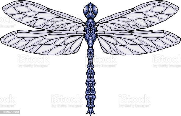 Dragonfly vector id165620333?b=1&k=6&m=165620333&s=612x612&h=dbjdxk8utubtnb03ob3qzhgmlrxbt4m4nxl1hvyon6s=