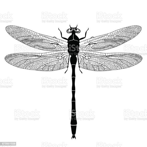Dragonfly view from above black and white monochrome illustration on vector id675951538?b=1&k=6&m=675951538&s=612x612&h=srbnex6w6iq5bb9hf3m qltu0 2ceablooeo8owcfp4=