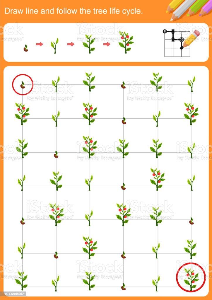 Zeichnen Sie Linie Und Folgen Sie Den Baumlebenszyklus Arbeitsblatt ...