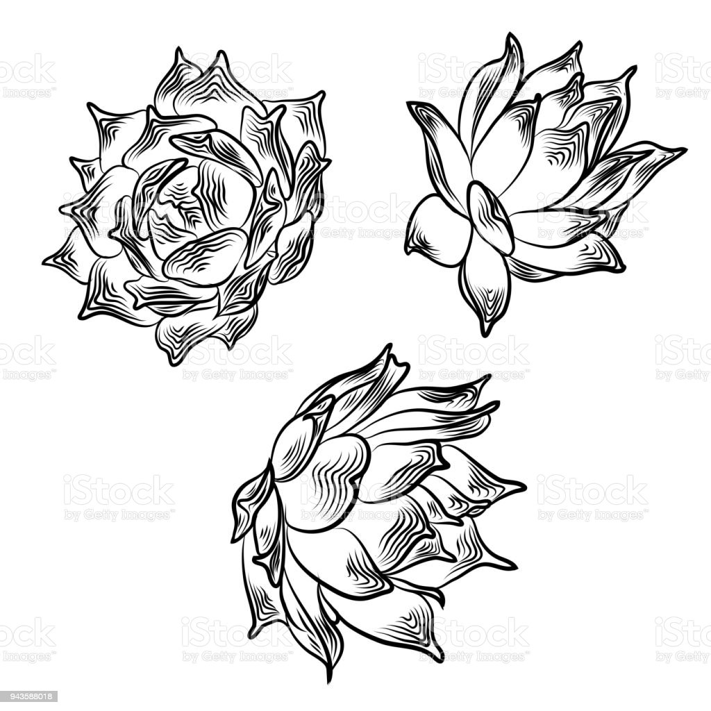 Drawing cactus succulent bouquets elements for invitations greeting drawing cactus succulent bouquets elements for invitations greeting cards covers and other items m4hsunfo Choice Image