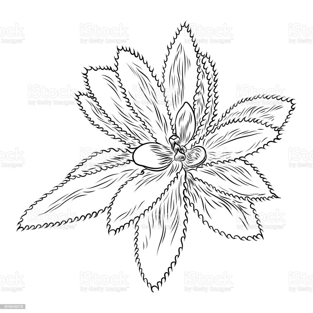 Drawing Cactus Succulent Bouquets Elements For Invitations Greeting