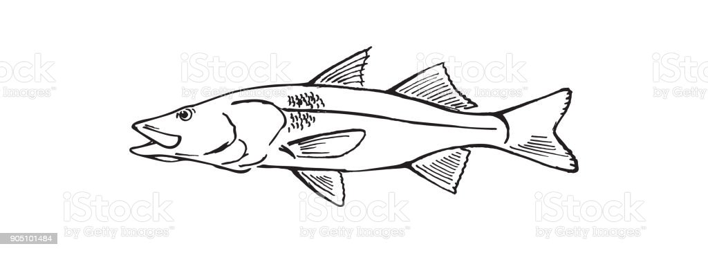 drawing fish vector art illustration