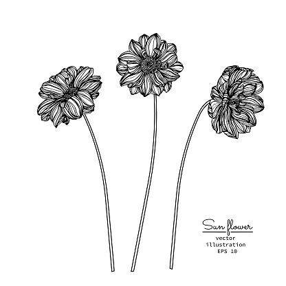 drawing flowers illustration vector and clip-art.