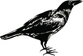 Illustrator 9 drawing of a black crow.