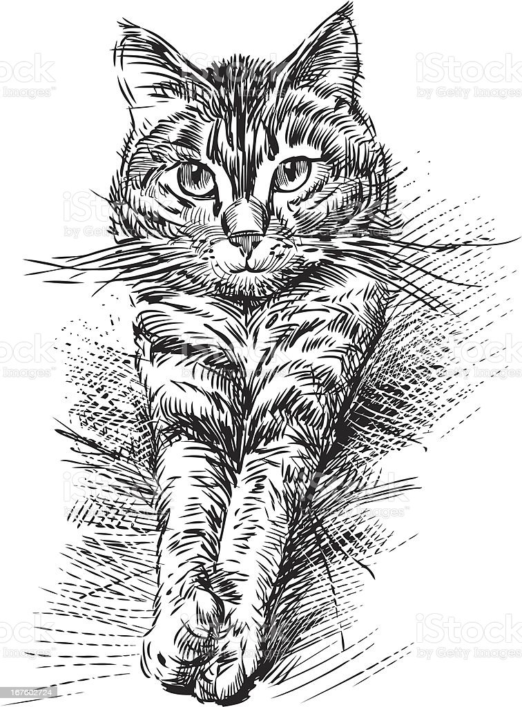 A drawing of a cute domestic cat vector art illustration