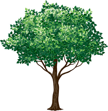 Drawing of a foliage tree on white background