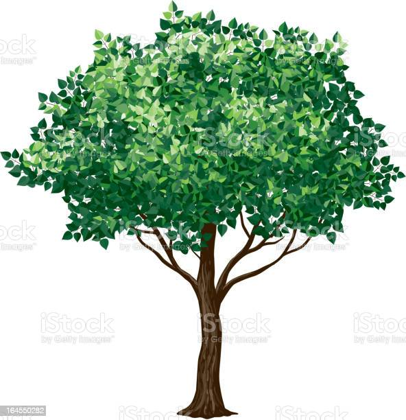 Drawing Of A Foliage Tree On White Background Stock Illustration - Download Image Now