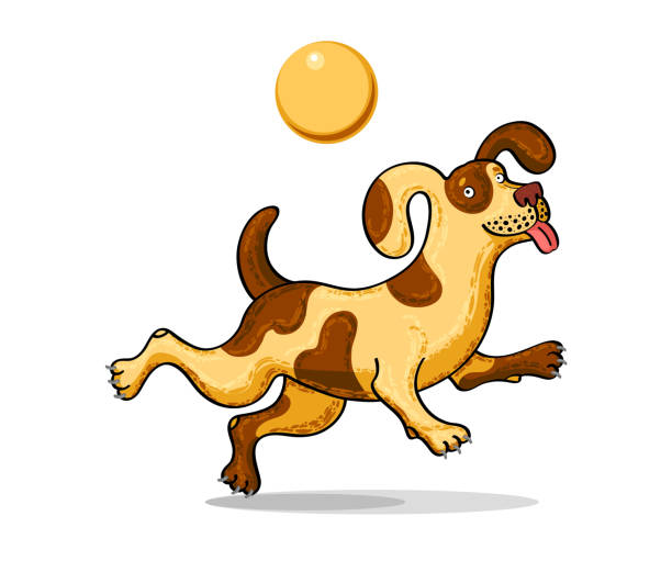 Best Dog Catching Ball Illustrations Royalty Free Vector