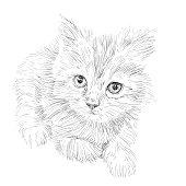 Image libre: à poil long, noir, chat fourrure, texture