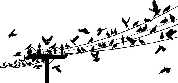 Drawing of birds on telephone wire vector art illustration