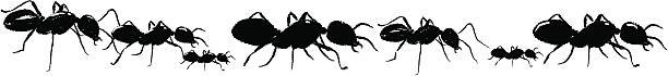 A drawing of black ants on a white background vector art illustration