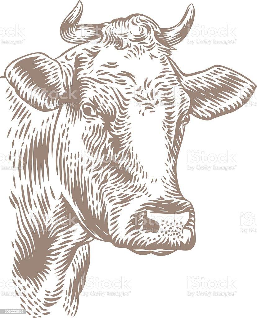 Dessin de tête de vache - Illustration vectorielle