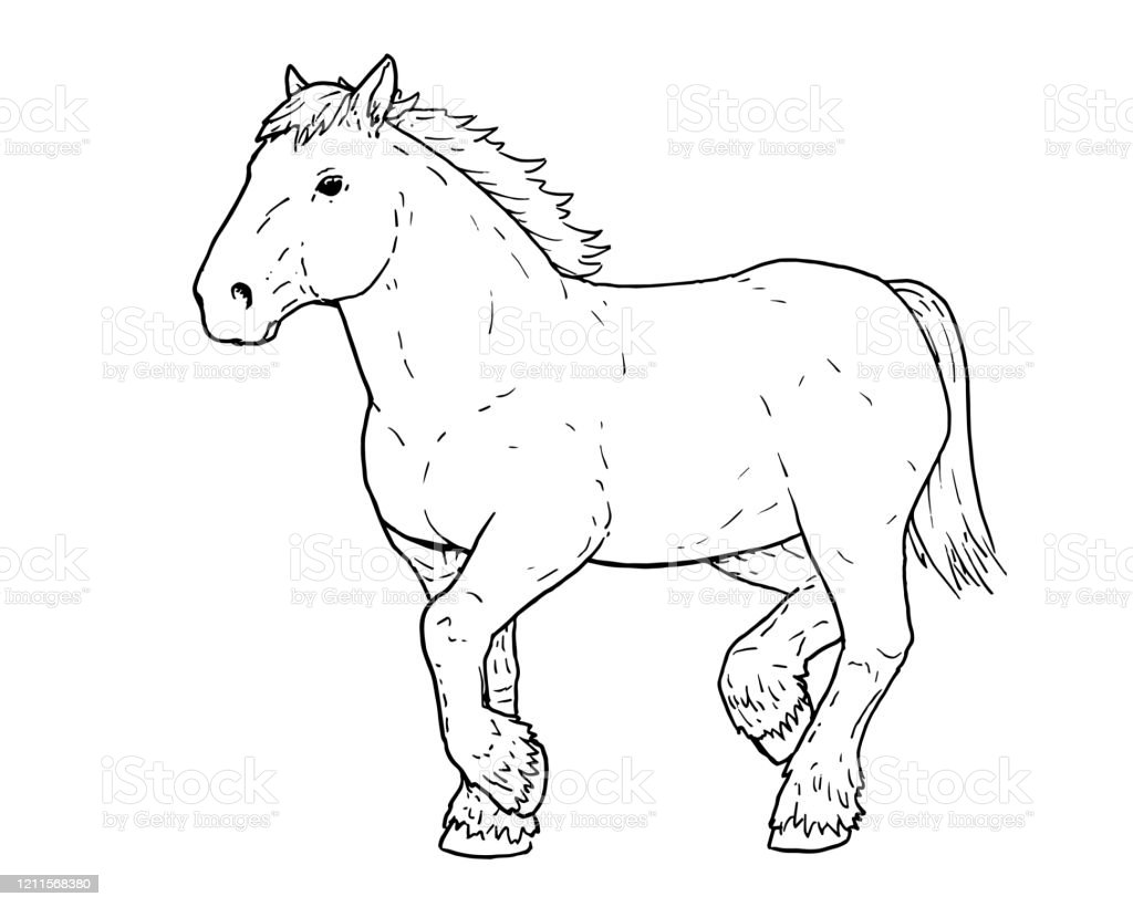 Drawing Of Dutch Draft Horse Stock Illustration Download Image Now Istock