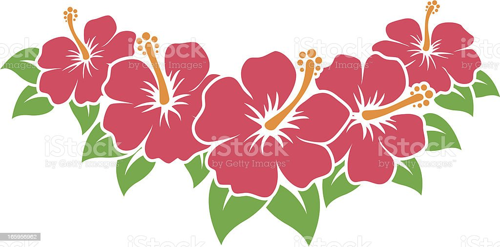 royalty free hibiscus flower clip art vector images illustrations rh istockphoto com hibiscus clip art images hibiscus clipart border
