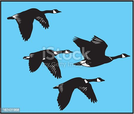 istock Drawing of four black flying swans in blue sky 162431958