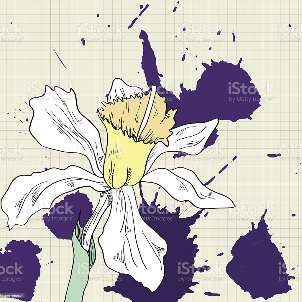 Drawing of narcissus royalty-free drawing of narcissus stock vector art & more images of abstract