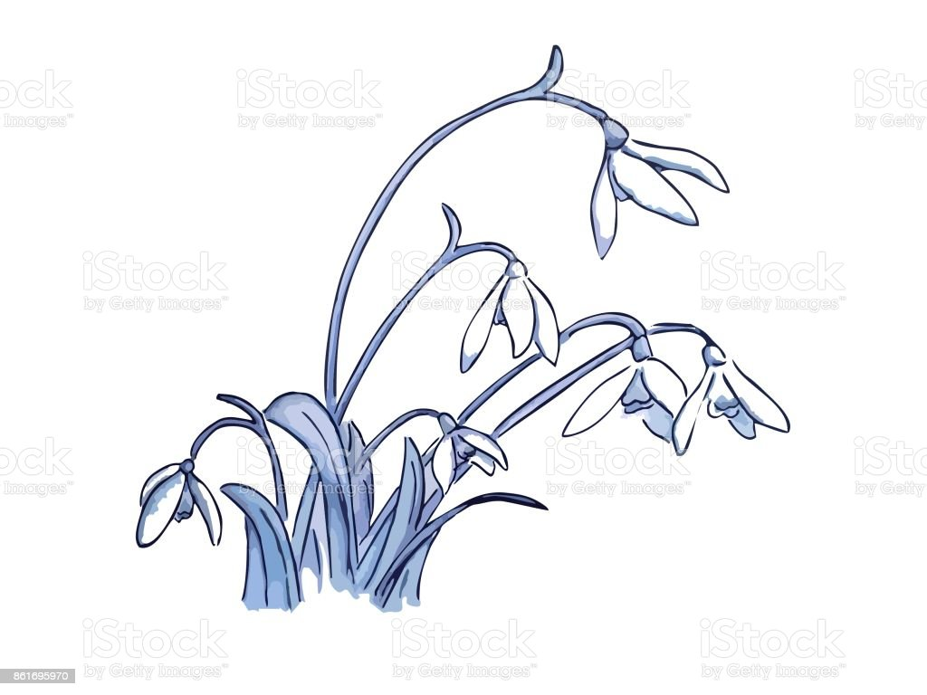 Dessin De Perceneige Vector Illustration De Fleurs Cliparts