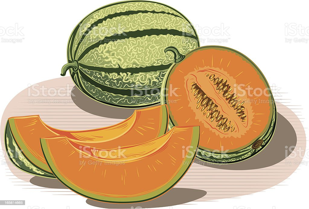 Drawing of whole and sliced melon vector art illustration