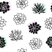 Drawing pattern with succulents