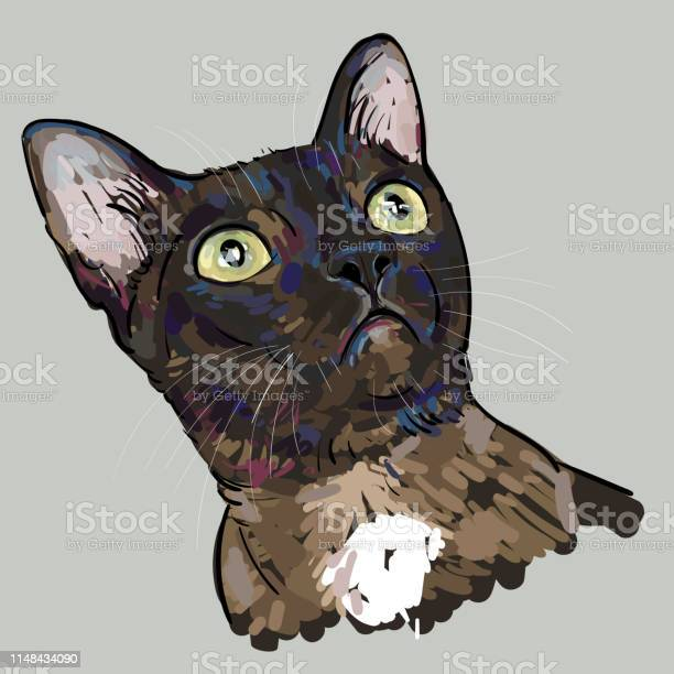 Drawing portrait of cat is staring up vector id1148434090?b=1&k=6&m=1148434090&s=612x612&h=9ue o em oyogdryxosyzy09s3aywo8j8lqoubx7q8u=
